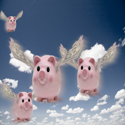 When Pig Fly Picture